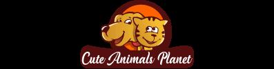 Cute Animals Planet